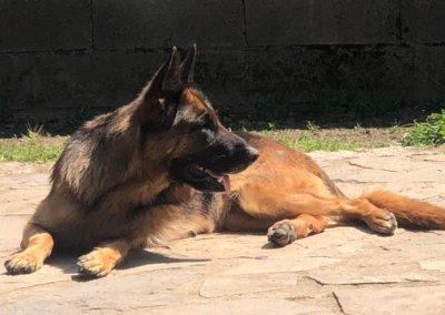 Vera de Cans de Rábade