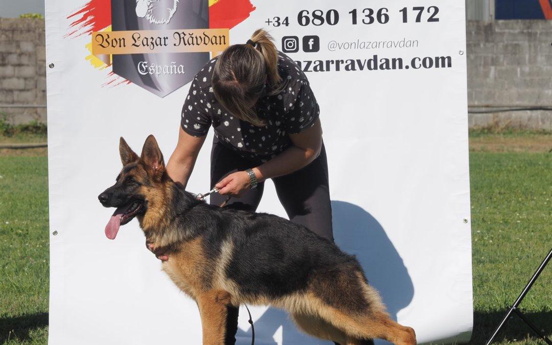 Bella Von Lazar Ravdan